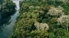 Ilustração em miniatura da noticia Paraná regulamenta substituição de espécies exóticas por nativas em áreas de preservação