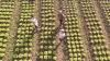 Ilustração em miniatura da noticia Governo publica edital de R$ 31,5 milhões para projetos da agricultura familiar